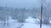 Fındık bahçeleri kar altında kaldı