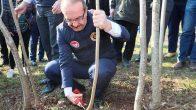 Vali Yavuz, Fındıkta Verimi Artırma Çalışmalarını Yerinde İnceledi